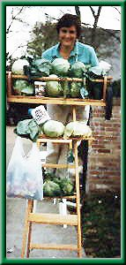cabbages, lady on ladder